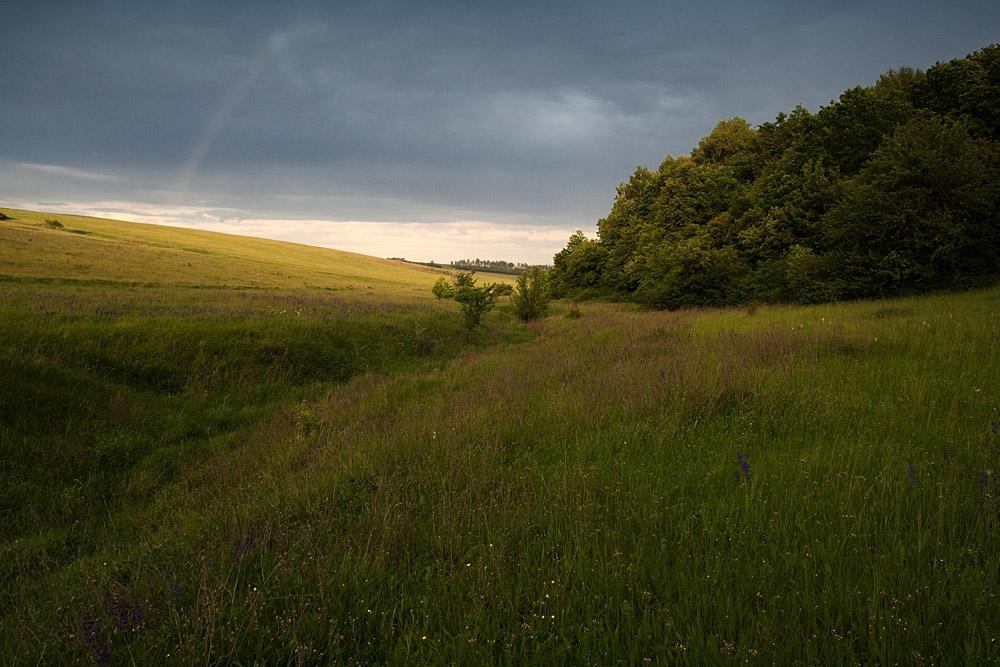 """фото """"Грянет ли буря?"""" метки: пейзаж, лес, лето"""