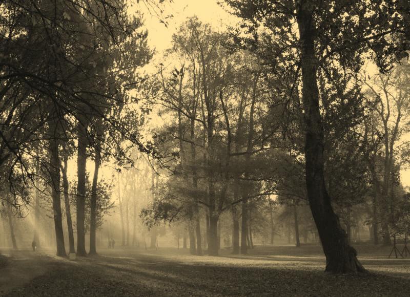 "фото ""Утро на Черной речке"" метки: пейзаж, лето"