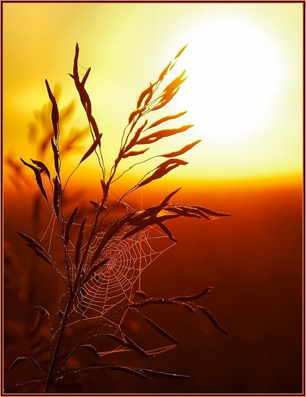 """фото """"Ловцы солнца"""" метки: пейзаж, закат, лес"""