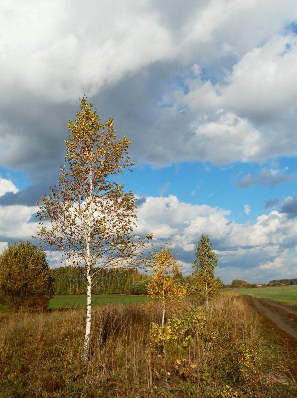 """фото """"октябрь"""" метки: пейзаж, осень"""
