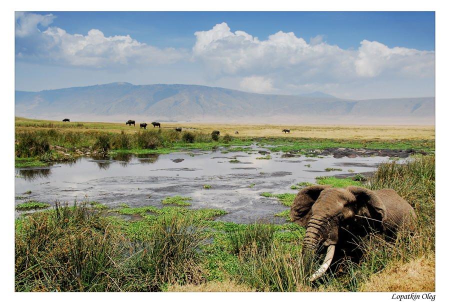 "фото ""Африканская идиллия"" метки: пейзаж, путешествия, Африка"