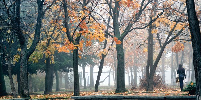 """фото """"Туман"""" метки: пейзаж, осень"""