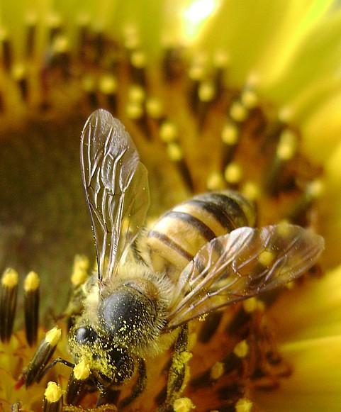 """фото """"***"""" метки: природа, насекомое, цветы"""
