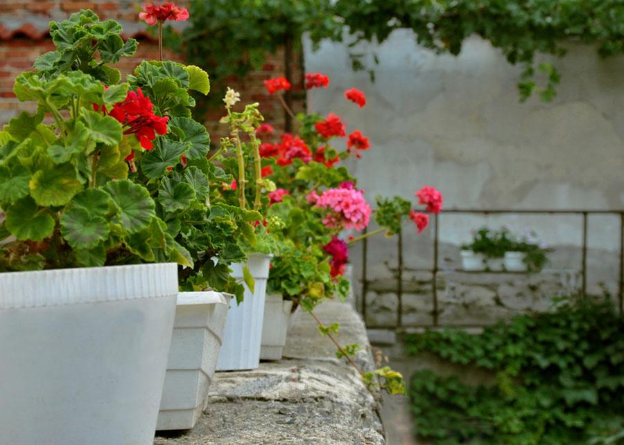 """фото """"Настроение..."""" метки: природа, цветы"""