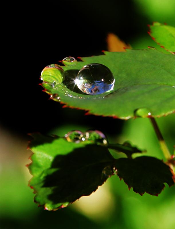 """фото """"В капле воды"""" метки: природа, макро и крупный план,"""