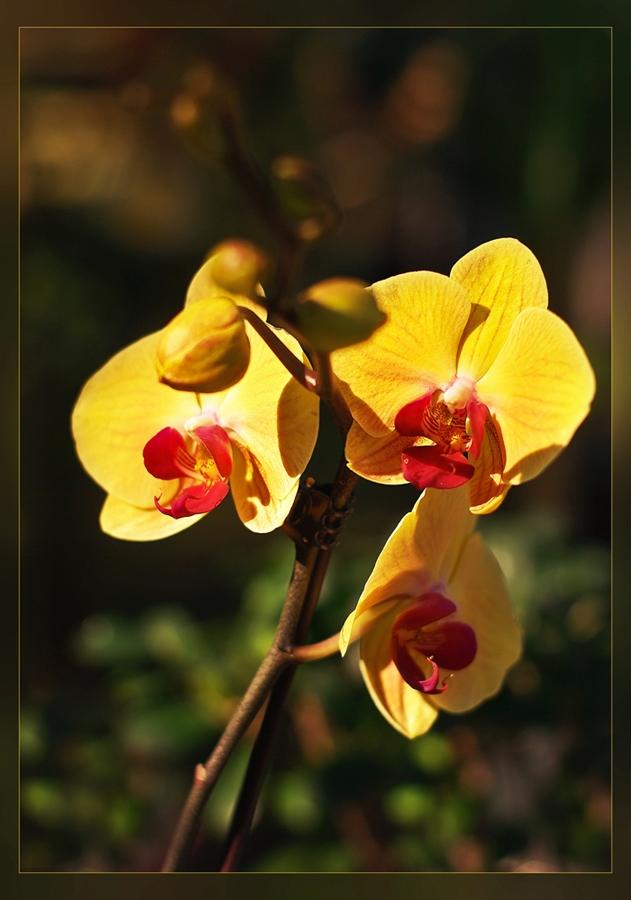 """фото """"В лучах уходящего лета..."""" метки: природа, цветы"""