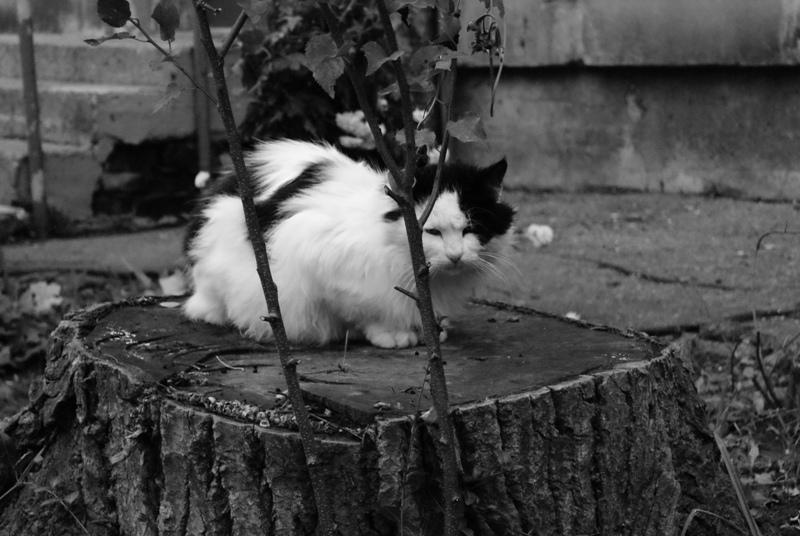 """фото """"Жизнь в черно-белых тонах..."""" метки: природа, домашние животные"""