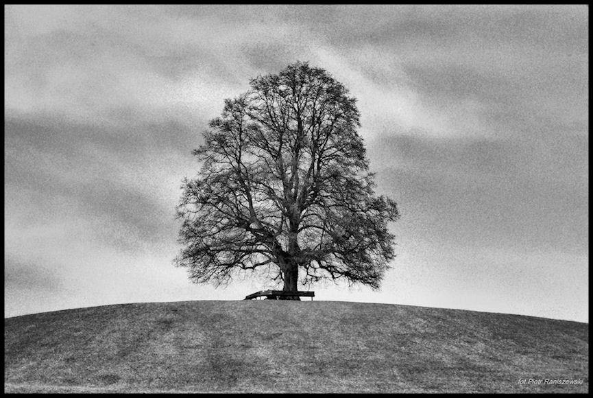 "фото ""Samotnosc"" метки: черно-белые, природа,"