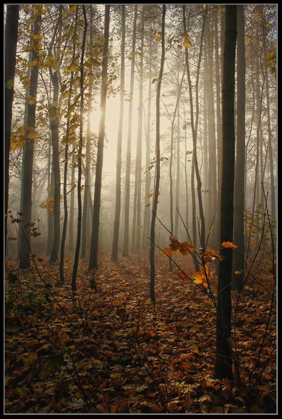 """фото """"В осеннем лесу..."""" метки: пейзаж, осень"""