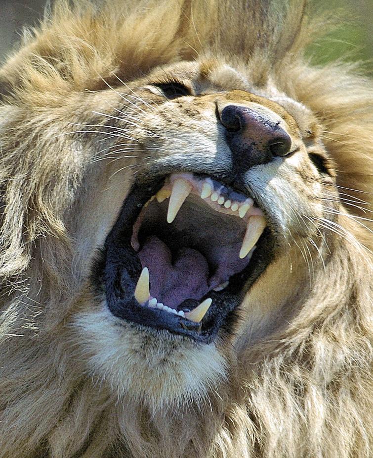 """фото """"Grumpy"""" метки: природа, дикие животные"""