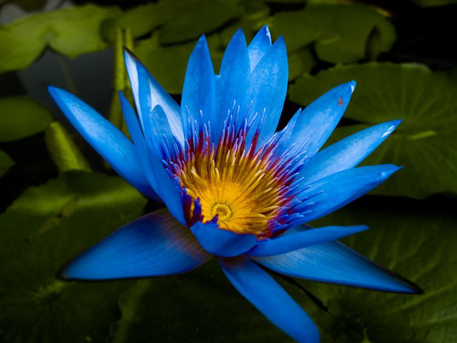 """фото """"Лето сочное"""" метки: природа, цветы"""