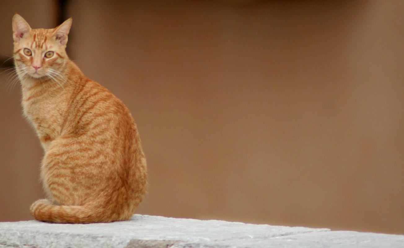 """фото """"mister cat"""" метки: природа, дикие животные"""