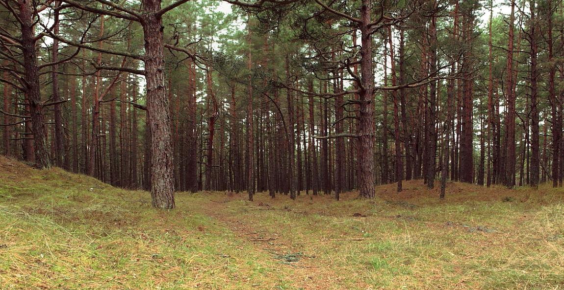 """фото """"Лес"""" метки: пейзаж, лес, осень"""