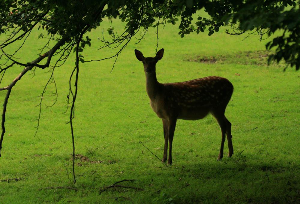 """фото """"В лесных кулисах"""" метки: природа, путешествия, Европа, дикие животные"""