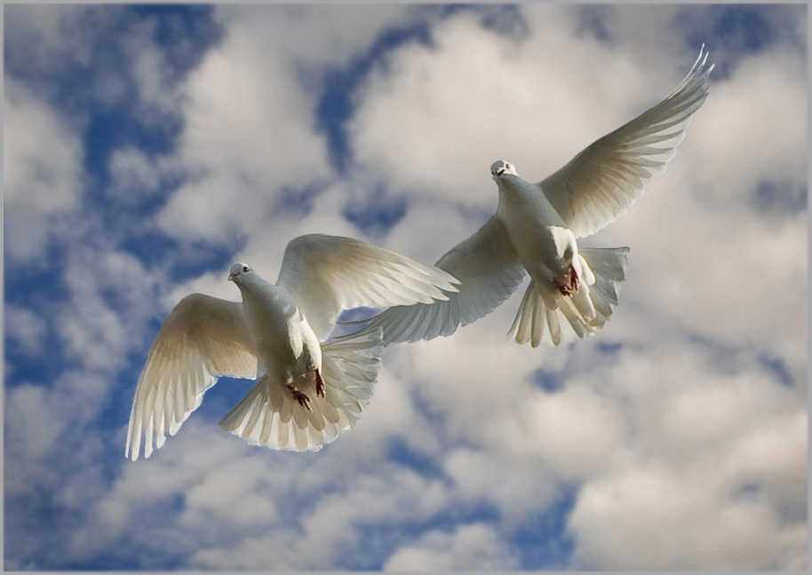 Днем, картинка голуби в небе
