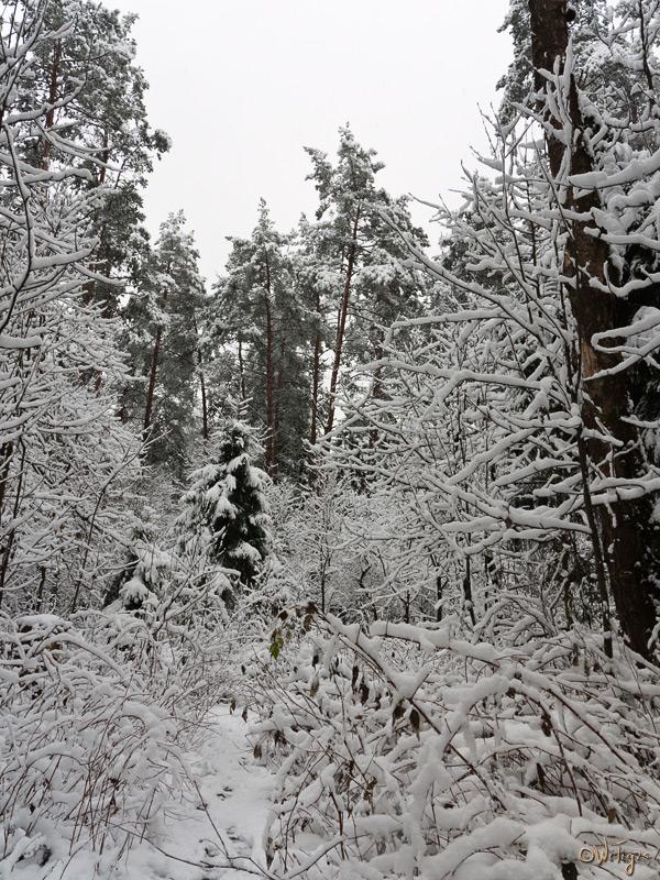 "фото ""В белом безмолвии"" метки: пейзаж, зима, лес"