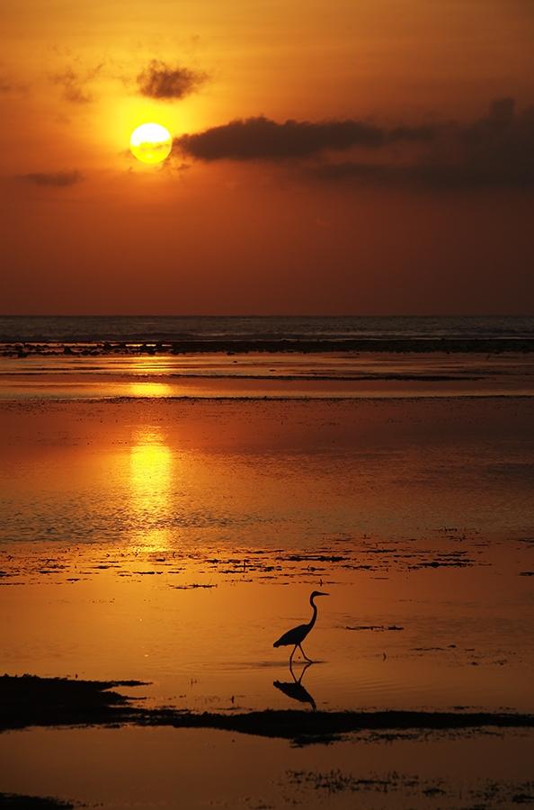 """фото """"Цапля на закате"""" метки: пейзаж, путешествия, Азия, закат"""