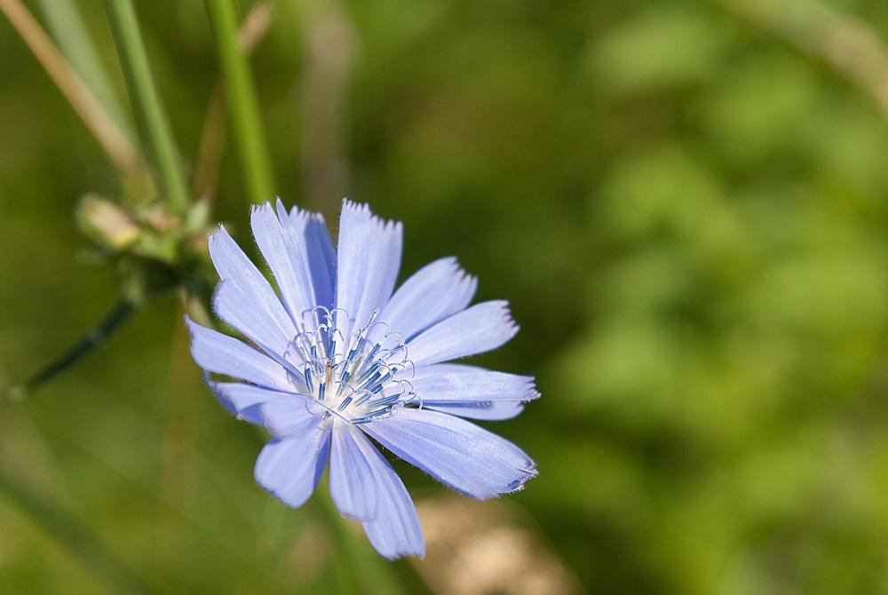 """фото """"Я открыт миру"""" метки: природа, цветы"""