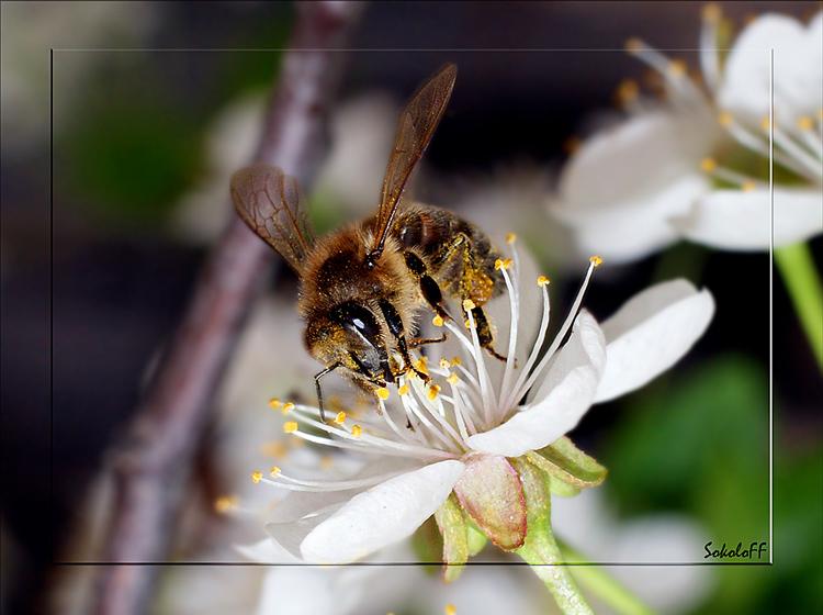 """фото """"Весенние заботы"""" метки: макро и крупный план, природа, насекомое"""