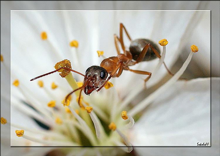 """фото """"Цветочное караоке"""" метки: макро и крупный план, природа, насекомое"""