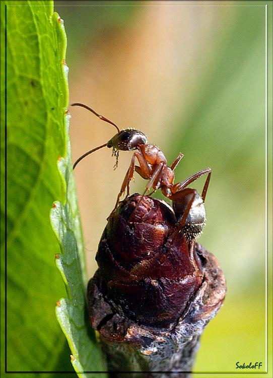 """фото """"На посту"""" метки: макро и крупный план, природа, насекомое"""