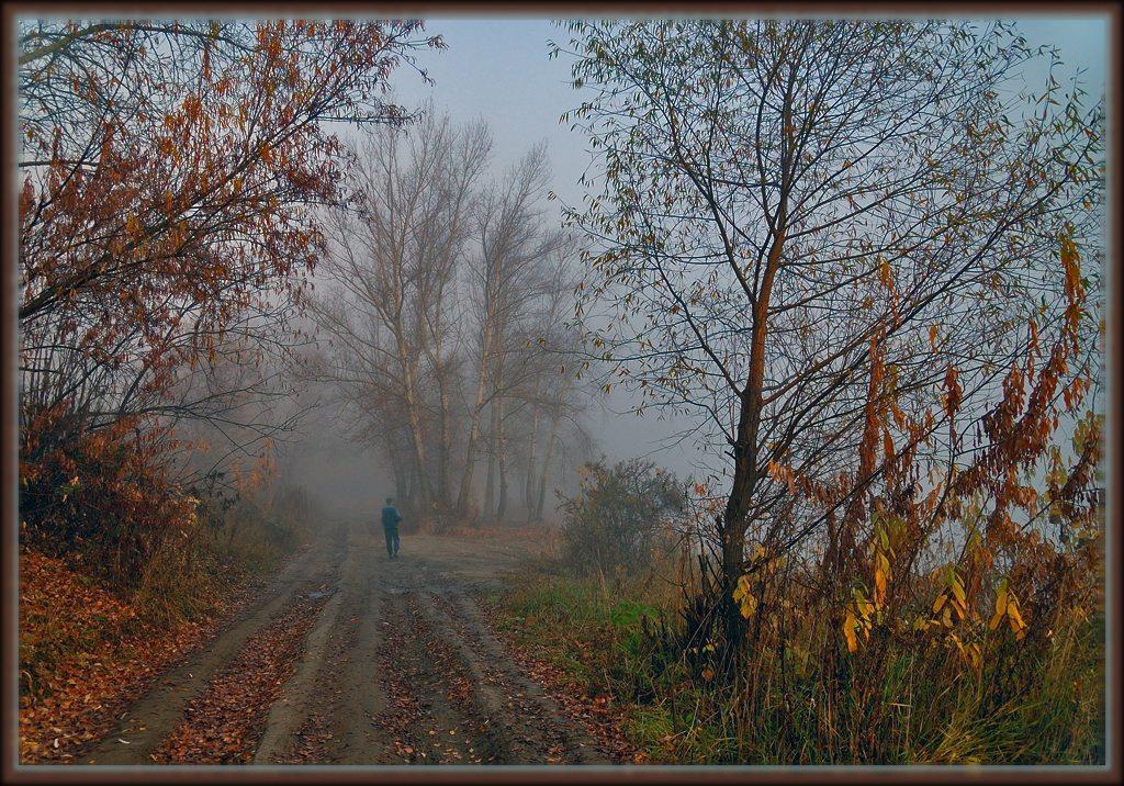 """фото """"Сиреневый туман..."""" метки: пейзаж, лес, осень"""