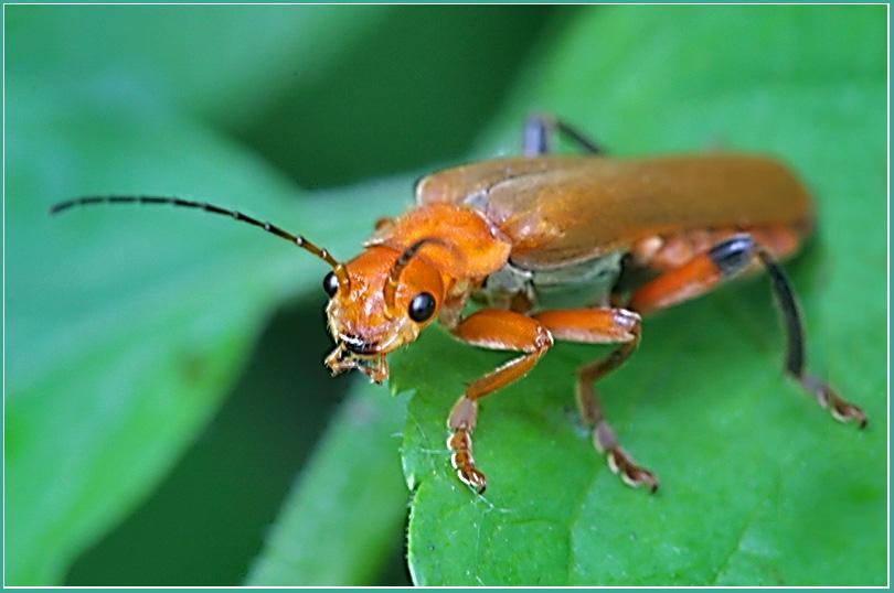 """фото """"Я вас знаю"""" метки: природа, макро и крупный план, насекомое"""