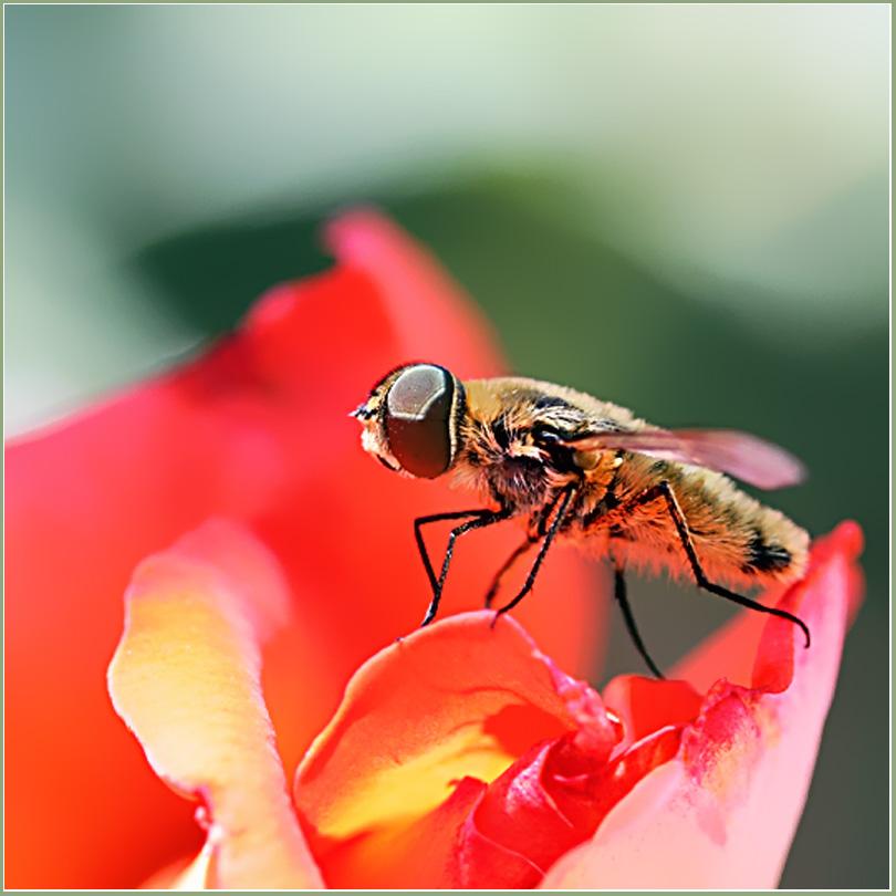 """фото """"Топ-модель"""" метки: природа, макро и крупный план, насекомое"""
