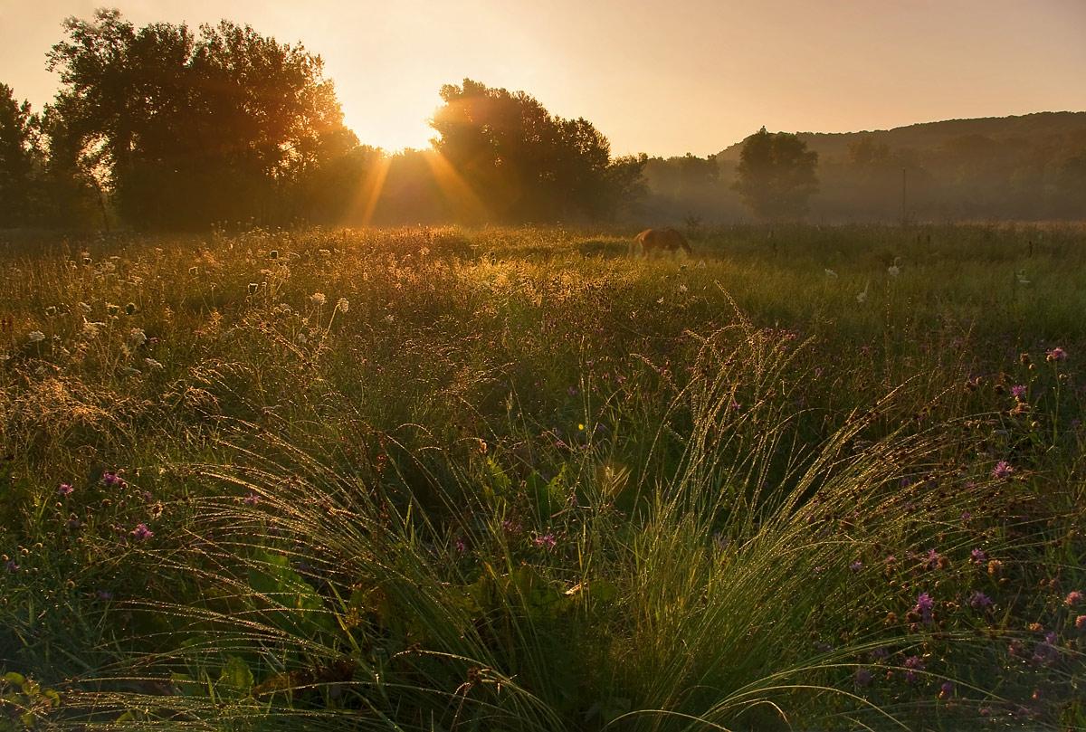 """фото """"Искрясь в лучах рассвета"""" метки: пейзаж, закат, лето"""