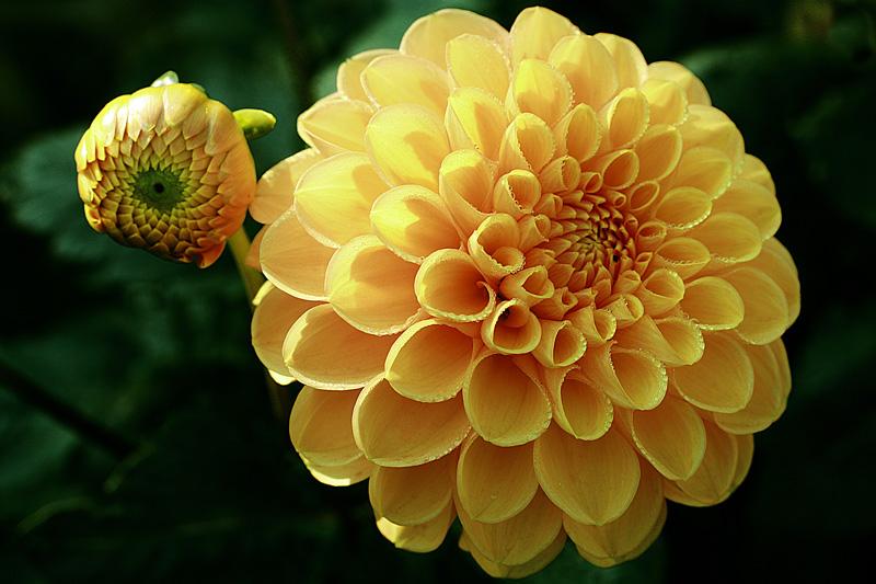 """фото """"Mother and daughter"""" метки: природа, макро и крупный план, цветы"""
