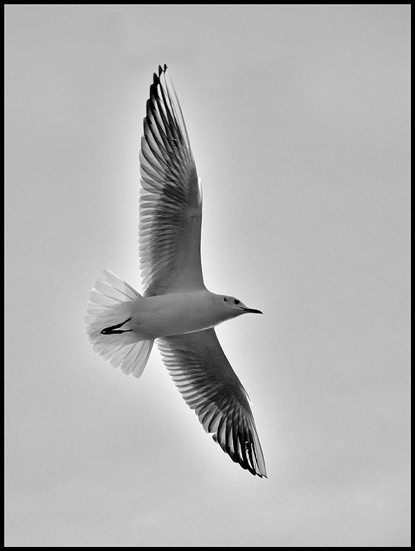 "фото ""Freedom"" метки: природа,"