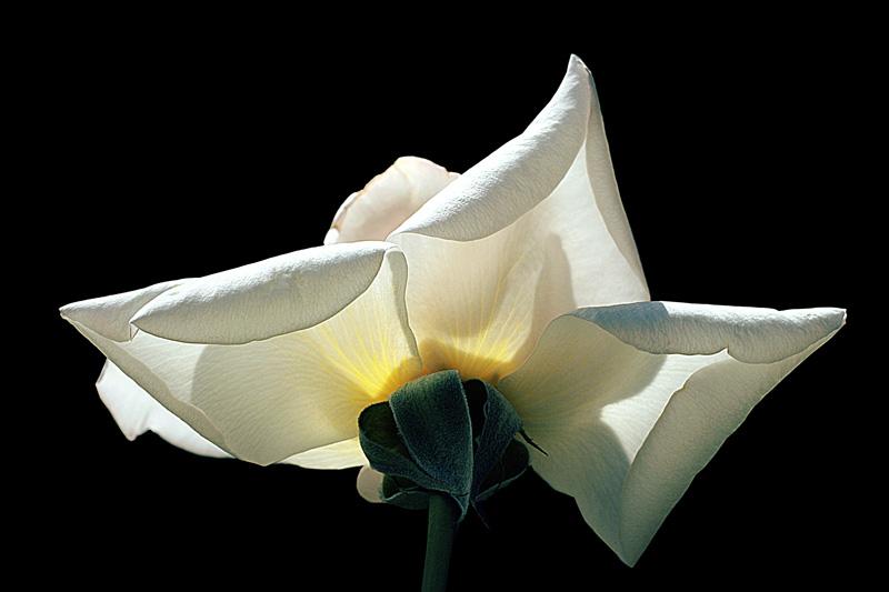 """фото """"Source of light II"""" метки: природа, макро и крупный план, цветы"""