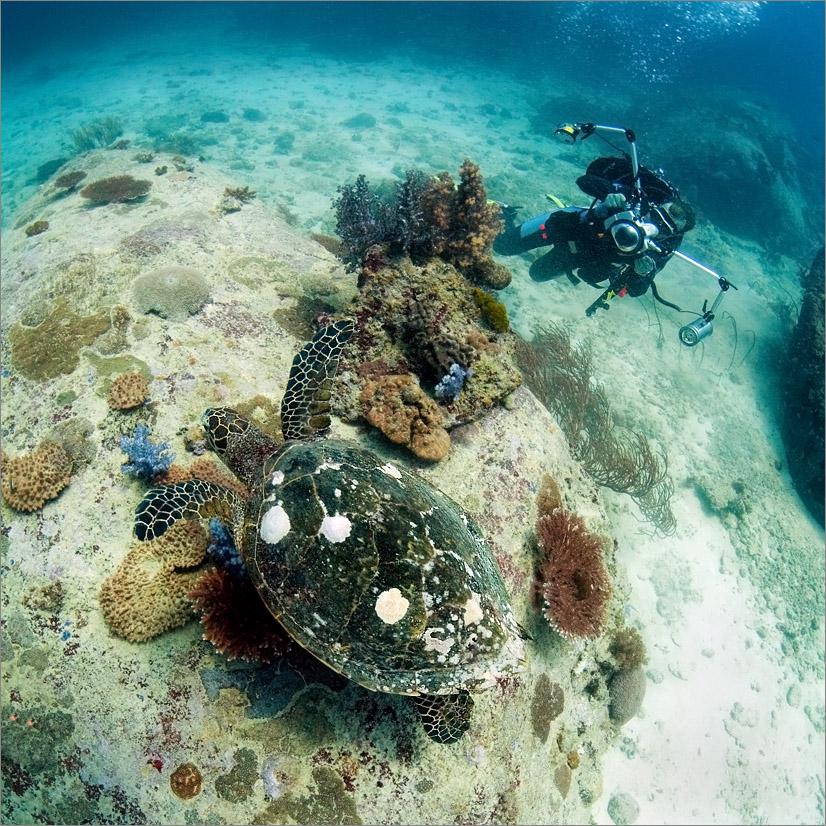"""фото """"Подводная фото охота за черепахой"""" метки: подводные,"""