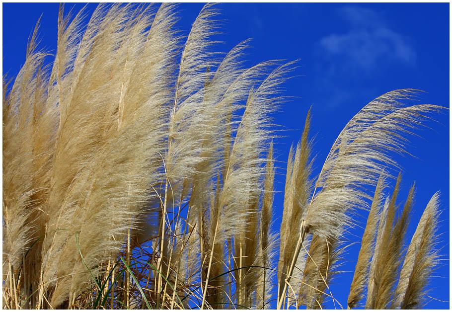 "фото ""Breath of Wind"" метки: природа, пейзаж,"