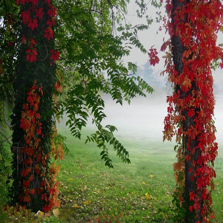 """фото """"Autumn colors"""" метки: пейзаж, лес"""