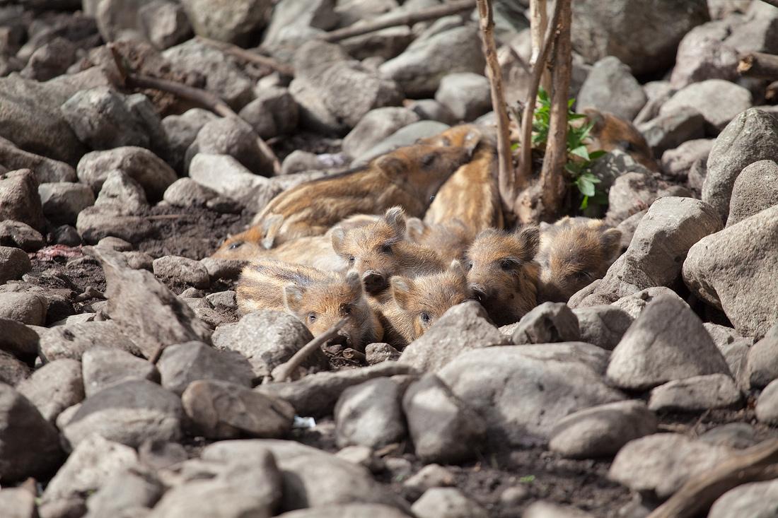"""фото """"маскировка"""" метки: природа, дикие животные"""