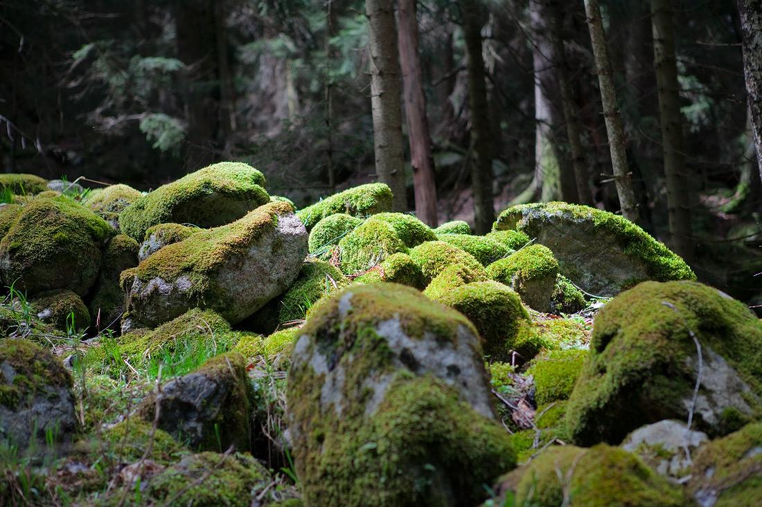 """фото """"."""" метки: пейзаж, лес"""