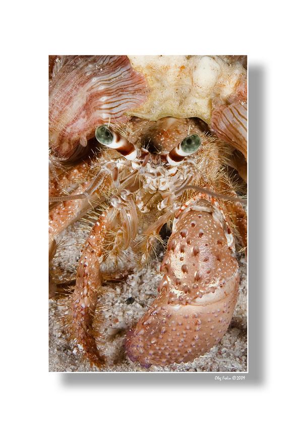 """фото """"Серьезный парень"""" метки: подводные, макро и крупный план,"""