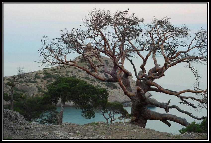 """фото """"Картинка из Нового Света..."""" метки: пейзаж, лето"""