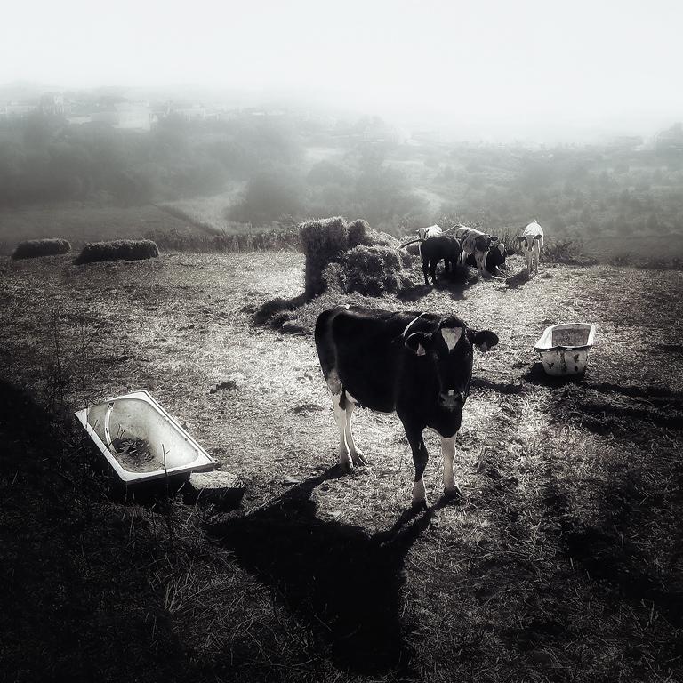 """фото """"Lulubelle III"""" метки: репортаж, черно-белые,"""