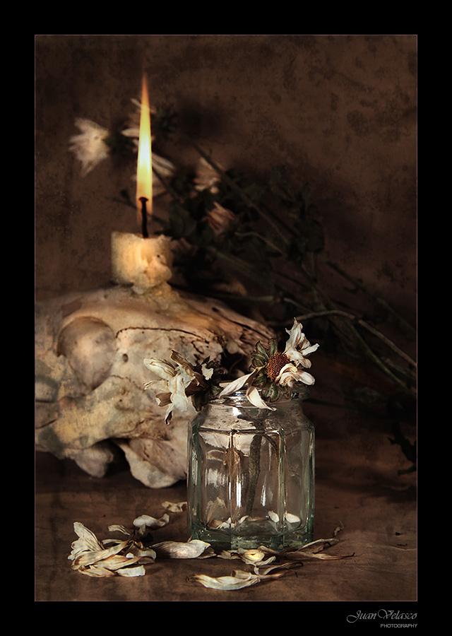 "фото ""Dead Flowers"" метки: натюрморт,"