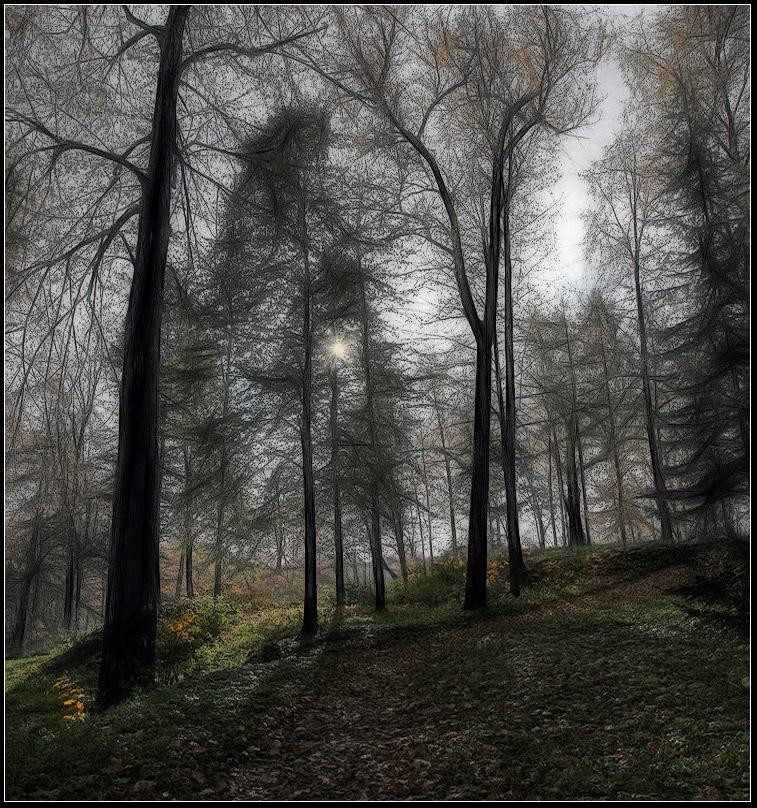 """фото """"осень в лесу"""" метки: пейзаж, лес, осень"""