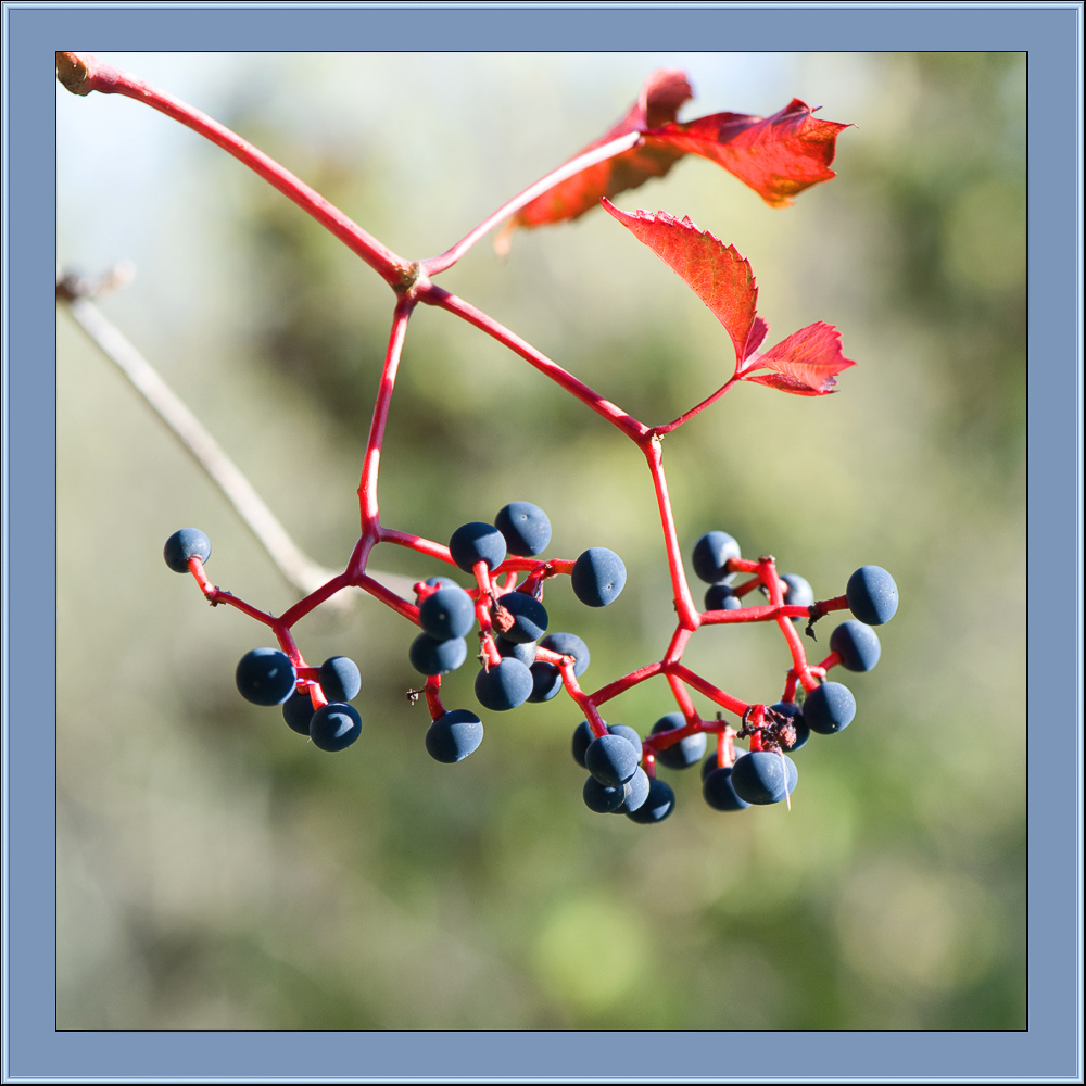 "фото ""5"" метки: фрагмент, природа, цветы"