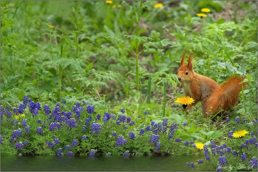 """фото """"О позитиве. Здравствуй, Белочка!)))"""" метки: природа, дикие животные, цветы"""