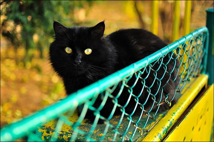 """фото """"Black cat"""" метки: природа, разное, домашние животные"""