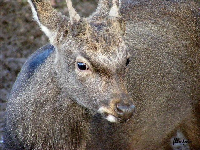 """фото """"Wildlife."""" метки: природа, дикие животные"""