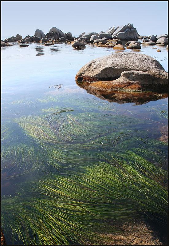 "фото ""Зеленая, зеленая..."" метки: пейзаж, вода, лето"