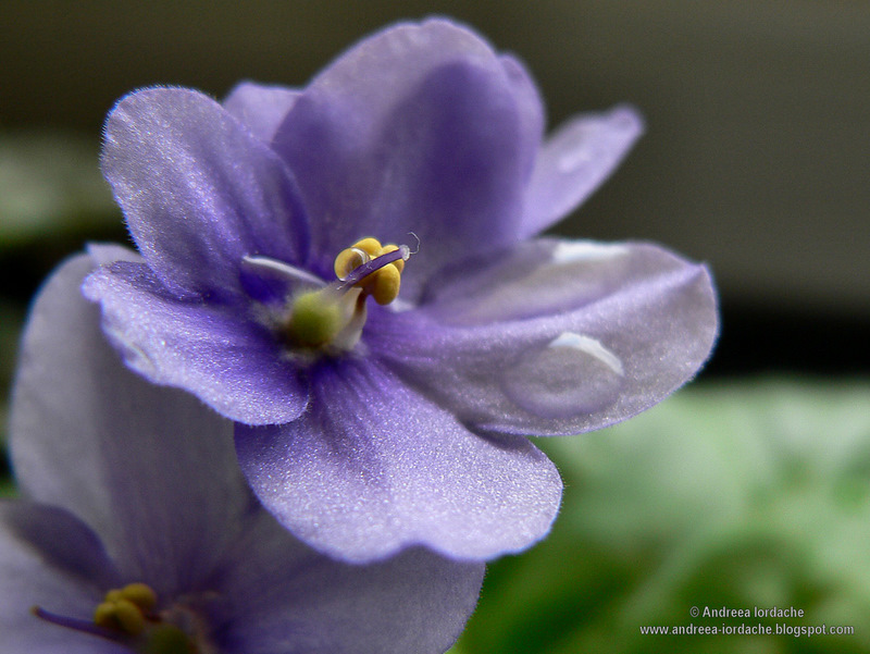 "photo ""Macro"" tags: macro and close-up,"