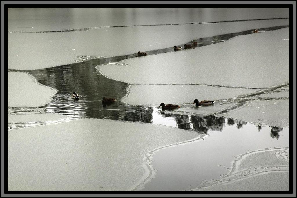 "фото ""2009 г. Кратово. Пруд на реке Хрипань."" метки: пейзаж, зима"