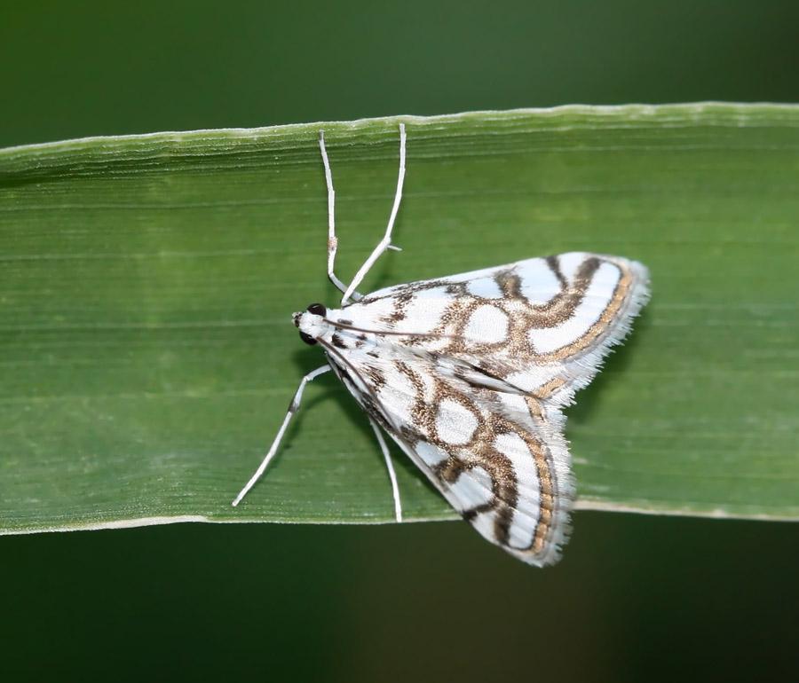 """фото """"single"""" метки: природа, макро и крупный план, насекомое"""